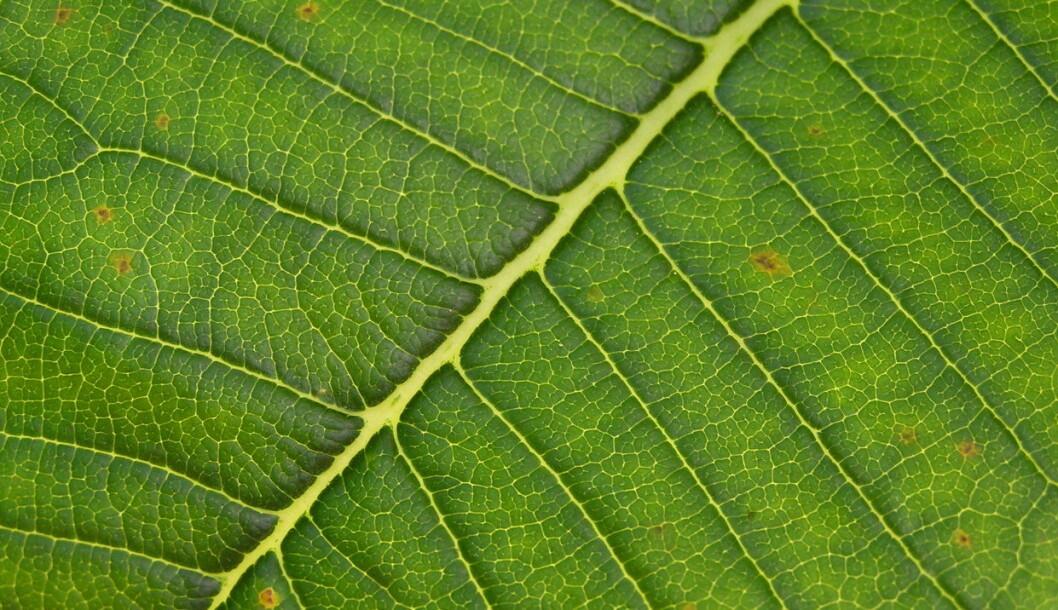 grønt blad_colourbox