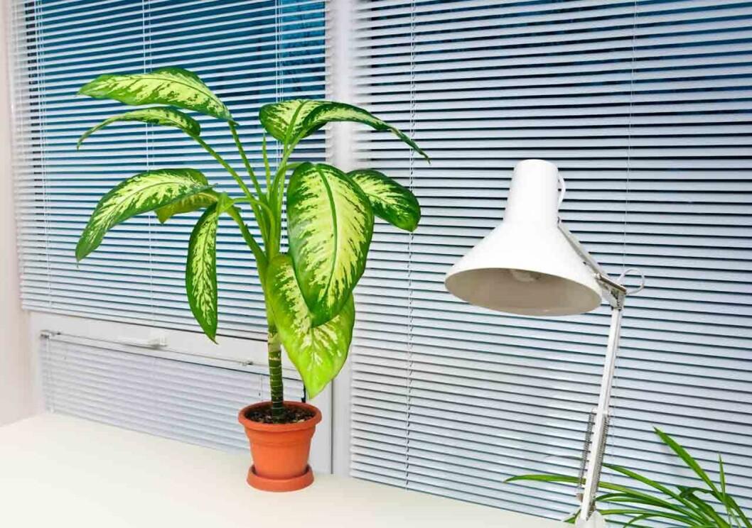 Planter-på-kontoret