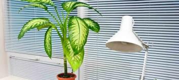 10 planter som renser luften