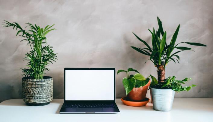 Grønne planter bidrar til å rense luften.